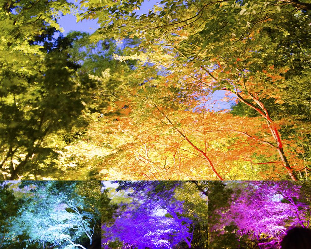 Disco Trees